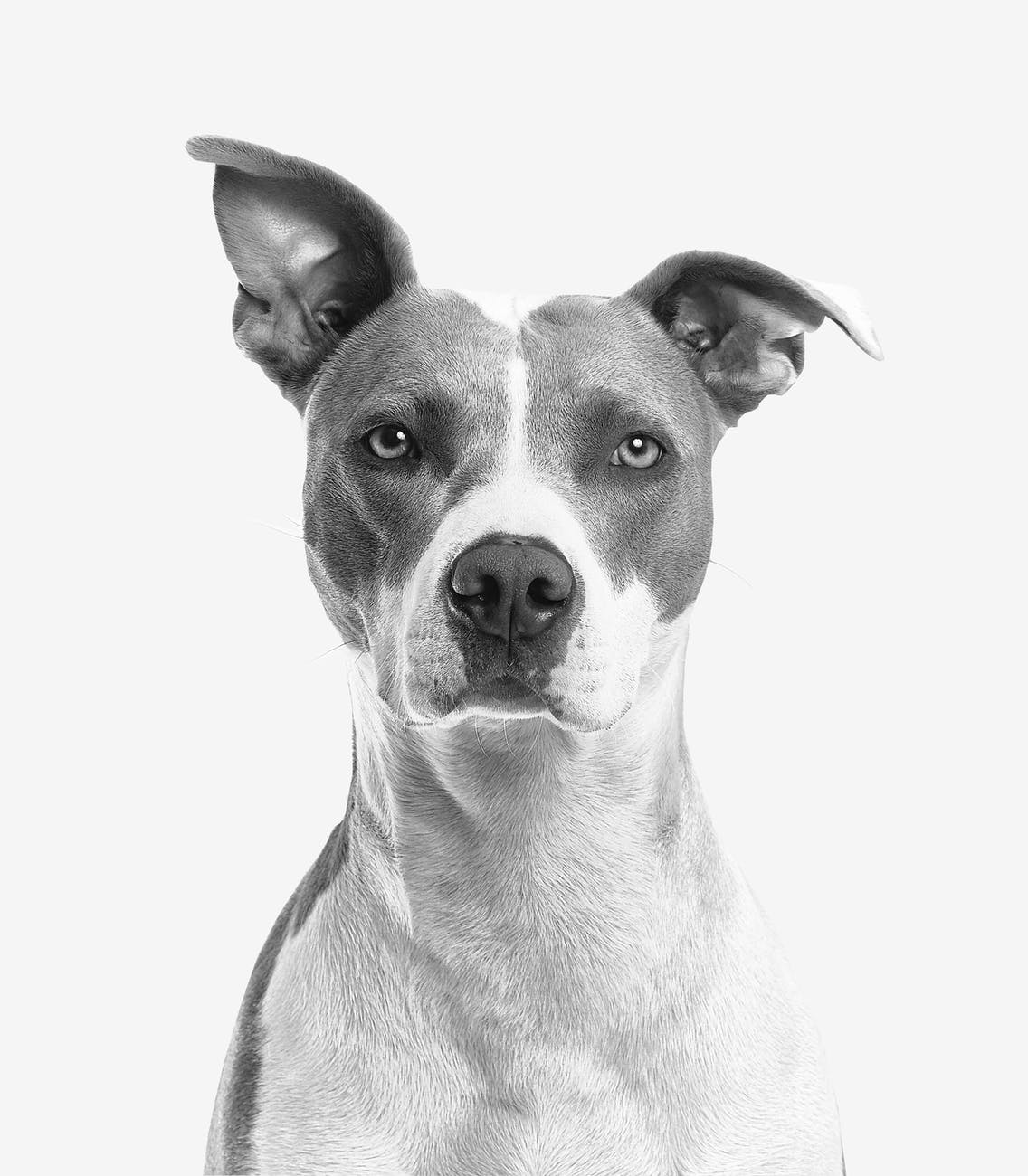 Can You File A Personal Injury Claim After A Dog Bite?