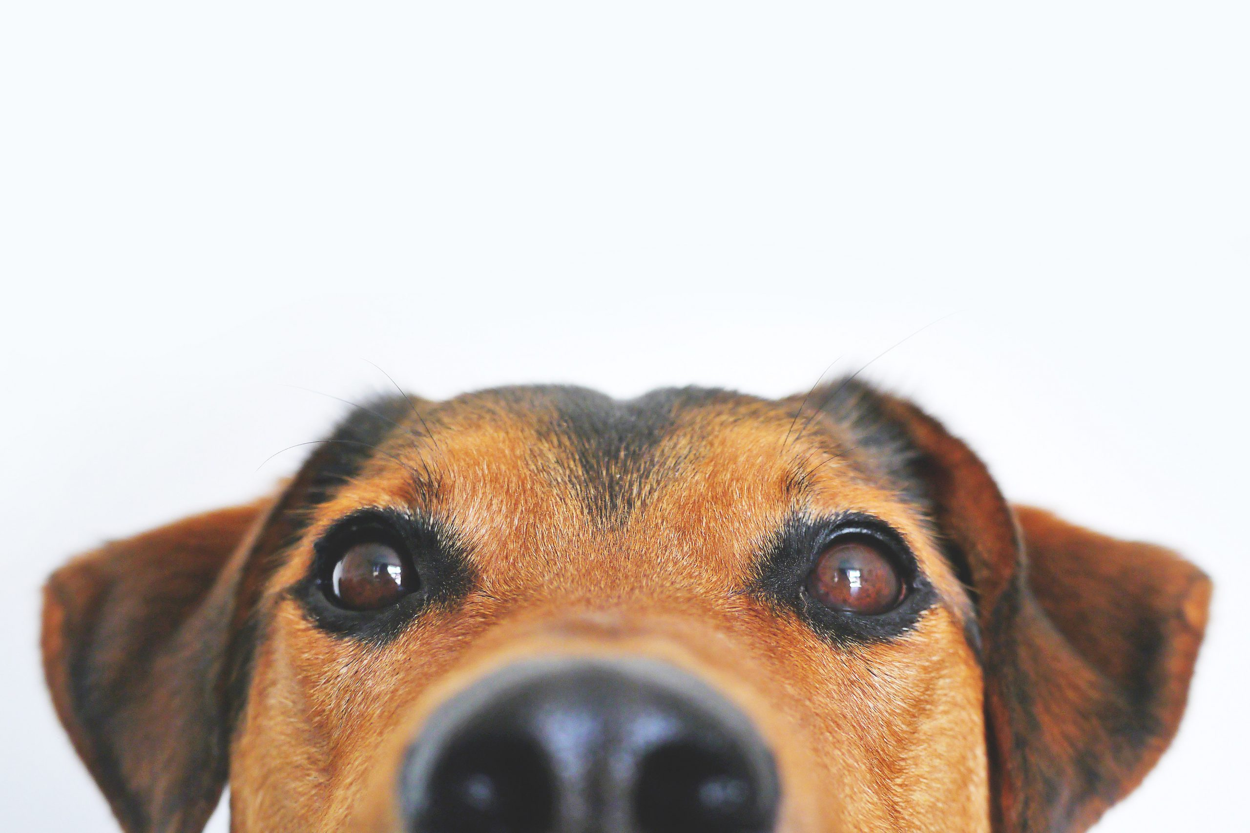 Tips To Reduce Your Risk Of A Dog Bite